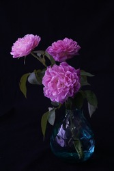 Three pink roses in a glass vase with blackbackground.