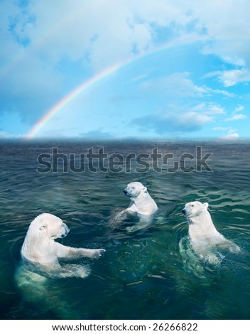 Three polar bears in the dark cold water, rainbow is on the background