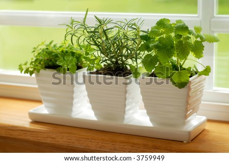 Three pots of herbs in a kitchen window: Marjoram, Rosemary, and Lemon Balm