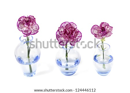 Three Purple and White carnation flowers on a glass vase