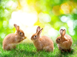 Three rabbit on green bokeh background .Easter concept