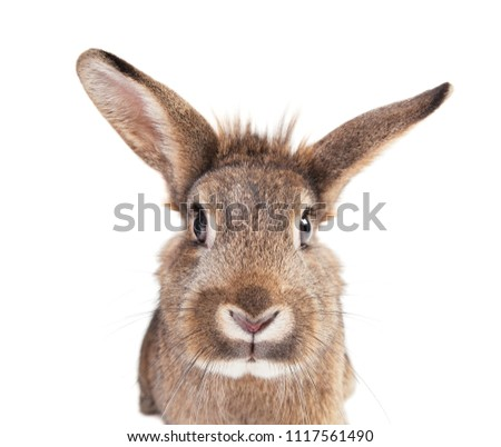 three rabbits in close-up, isolated on white background