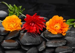 Three ranunculus flower with leaf on black stones