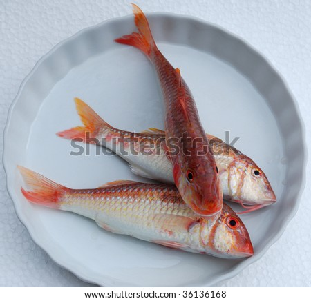 Three red fresh fishes on a white dish - stock photo