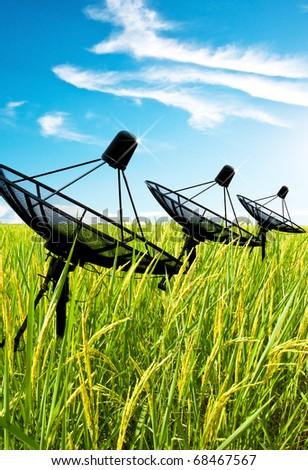 Three satellite dish antennas in field