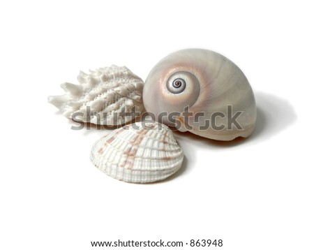 Three seashells