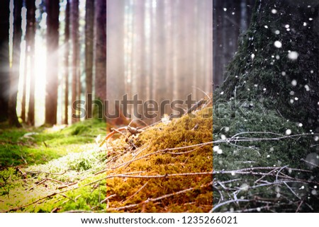 Three season in Forest