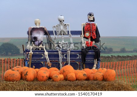 Three Skeletons looking after the pumpkins to illustrate the concept o f Halloween #1540170419