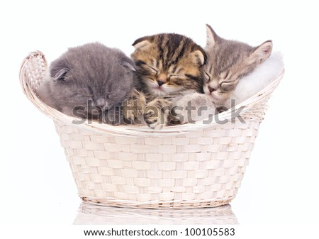 three sleeping kittens in the basket isolated on white