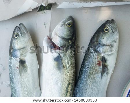 Three small Bluefish freshly caught