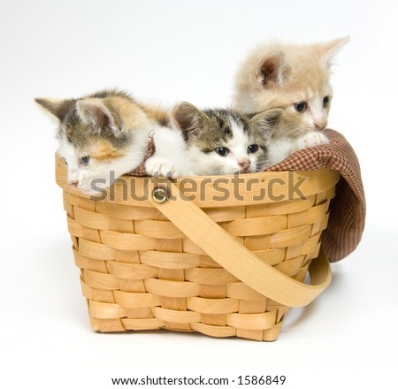 Three small kittens sitting in a basket