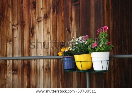 Three small pots of flowers hanging on balcony against old wooden wall