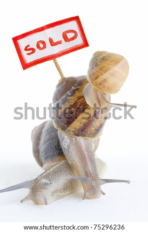 Three snails in a pile with a property sold sign.
