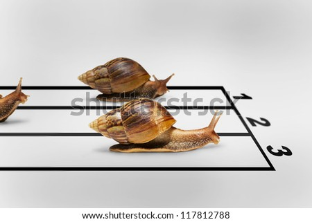 Three snails racing on grey background with shadow, Business competition concept