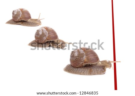 Three snails racing towards red finish line
