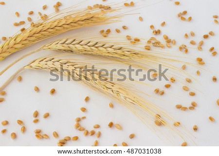 Three spikelets of wheat and grain on the white background
