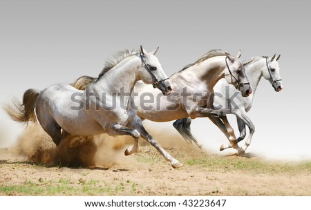 three stallions in dust
