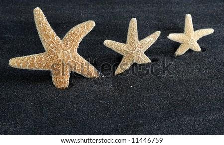 three starfish on black sand