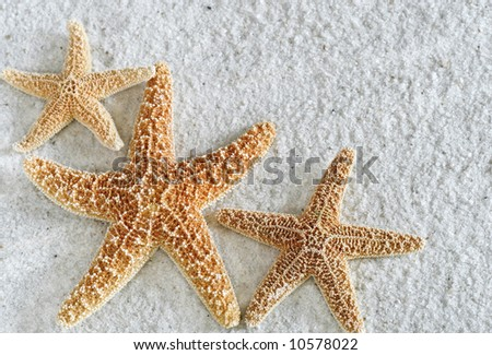 three starfish on white sand with copy-space