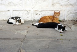 Three Stray Cats Chilling on the Street.