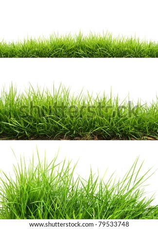 three style fresh spring green grass