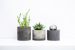 Three succulents or cactus in concrete pots over white background on the shelf.