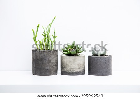 Three succulents or cactus in concrete pots over white background on the shelf. #295962569