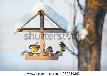 Three tit in the snowy winter bird feeder eating pork fat