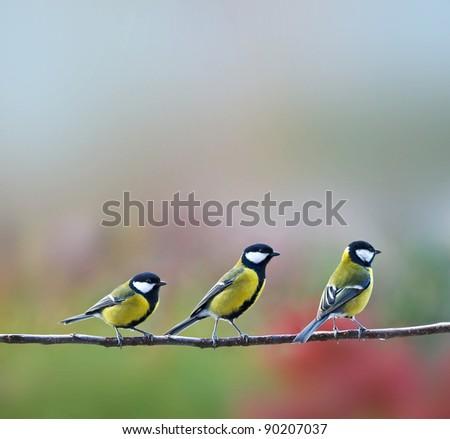 three titmouse birds