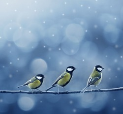 three titmouse birds in winter time
