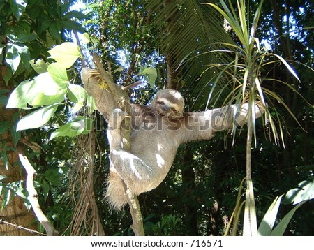Three Toad Sloth