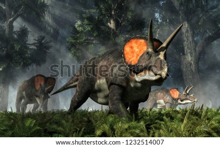 Three triceratops, ceratopsian dinosaurs from the cretaceous period, graze through the fern covered primeval forests.  Rays of sunshine illuminates these three horned huge reptiles. 3D Rendering
