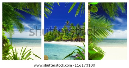 three  tropic  beach and palms theme pictures collage