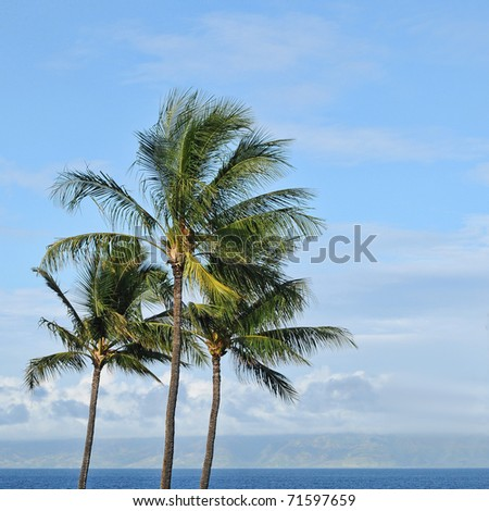 Three tropical palm trees against the background of a blue sky and ocean beach sea waters on the horizon with copyspace.