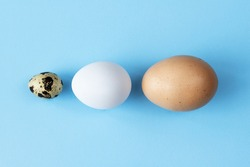 Three type of different birds eggs isolated on blue paper background. Various size and kind choice concept. Quail, egg and turkey eggs nutrients comparison. Segregation and equlty