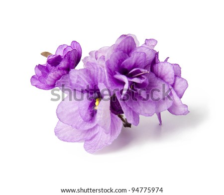 Three violets over white background