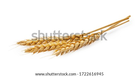 Three wheat spikelets isolated on white background