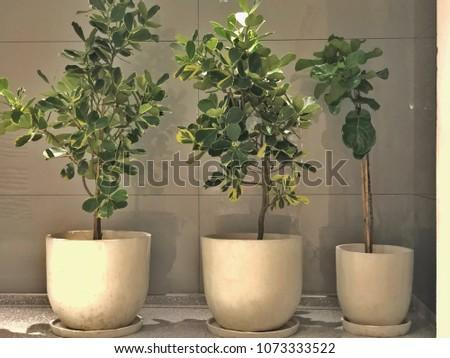 Three white flowerpots #1073333522