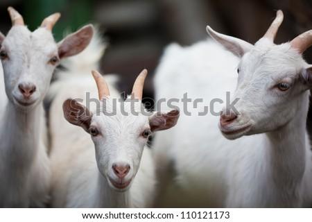 Three white kids