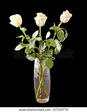 Three white roses over a black background