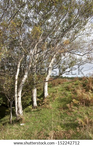three winswept trees in the county Donegal countryside of Ireland
