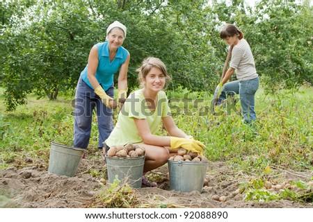 three women harvesting potatoes in field - stock photo