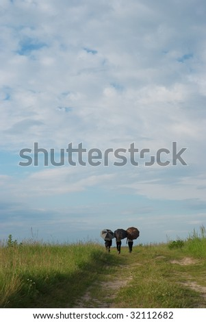 Three women with umbrellas on the summer field