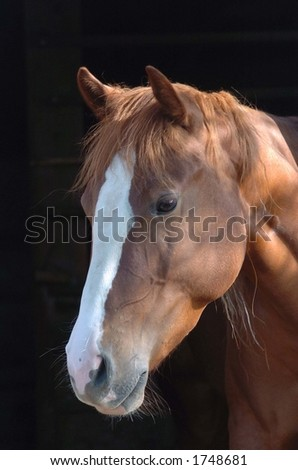three year old mare #1748681