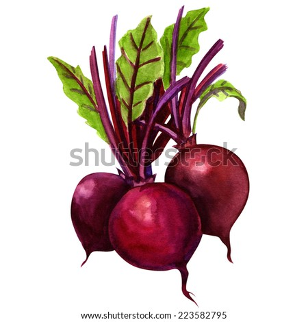 three young beets isolated
