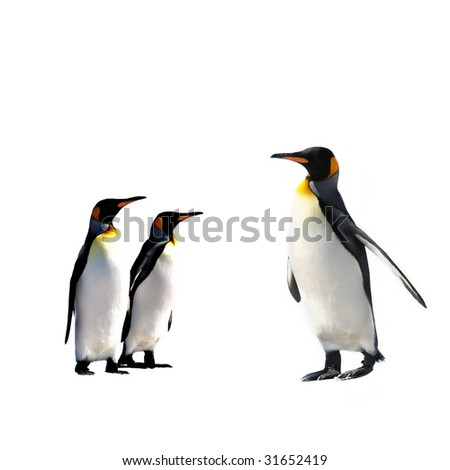 ThreeKing Penguins isolated on white background