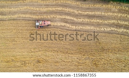 Thresher farming in golden wheat field. Aerial view of threshing machine working in Italy.