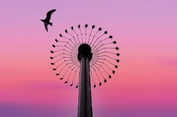 Thrilling amusement park ride and a bird