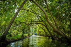 Thrilling view of the mangrove forest and narrow canals of the Poovar Island while enjoying a boat ride