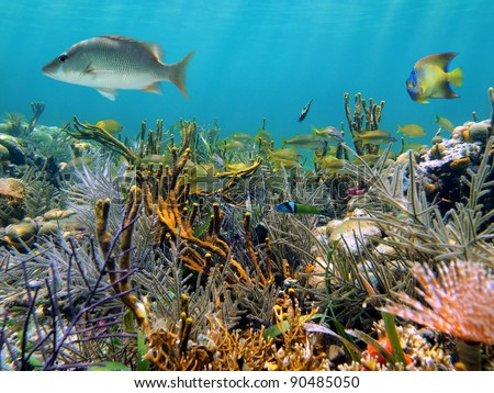 Thriving seabed with a coral reef and tropical fish Caribbean sea, Panama, Central America